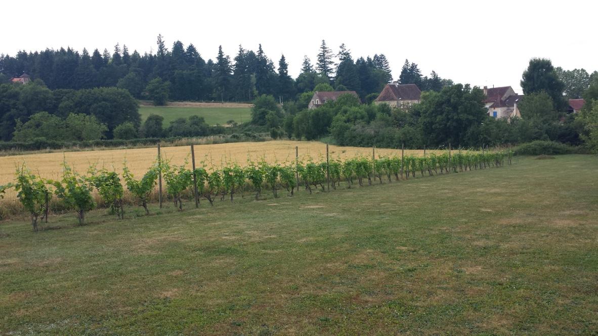 vigne-gite