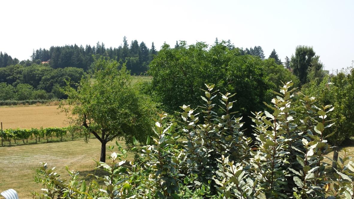 arbres-louera
